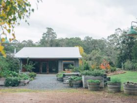 Foragers, Pemberton, Western Australia