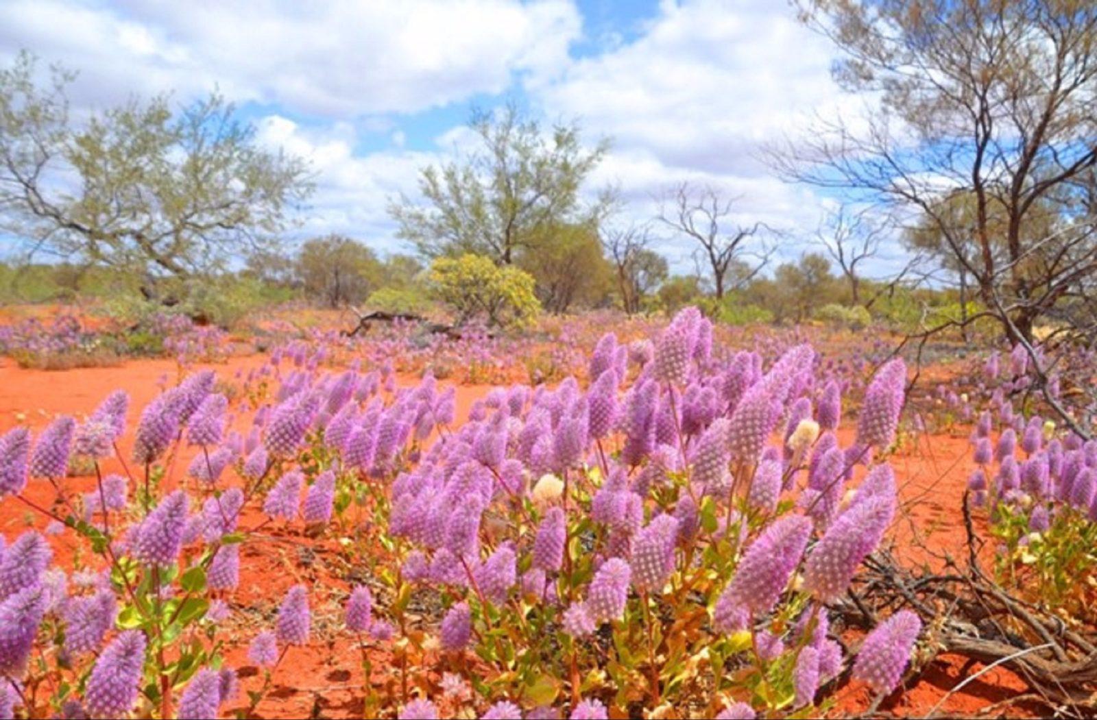 Gascoyne Murchison Outback Pathways, Western Australia
