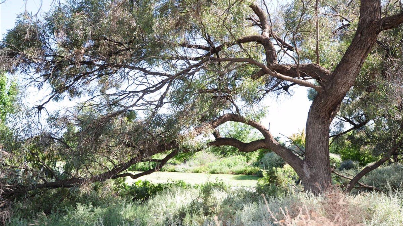 Gathercole Nature Reserve, Wongan Hills, Western Australia