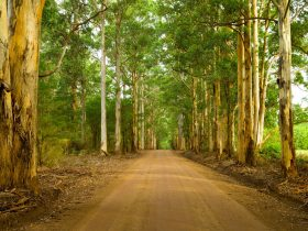 Genuinely Extraordinary Southern Forests Food and Farm Experience, Manjimup, Western Australia