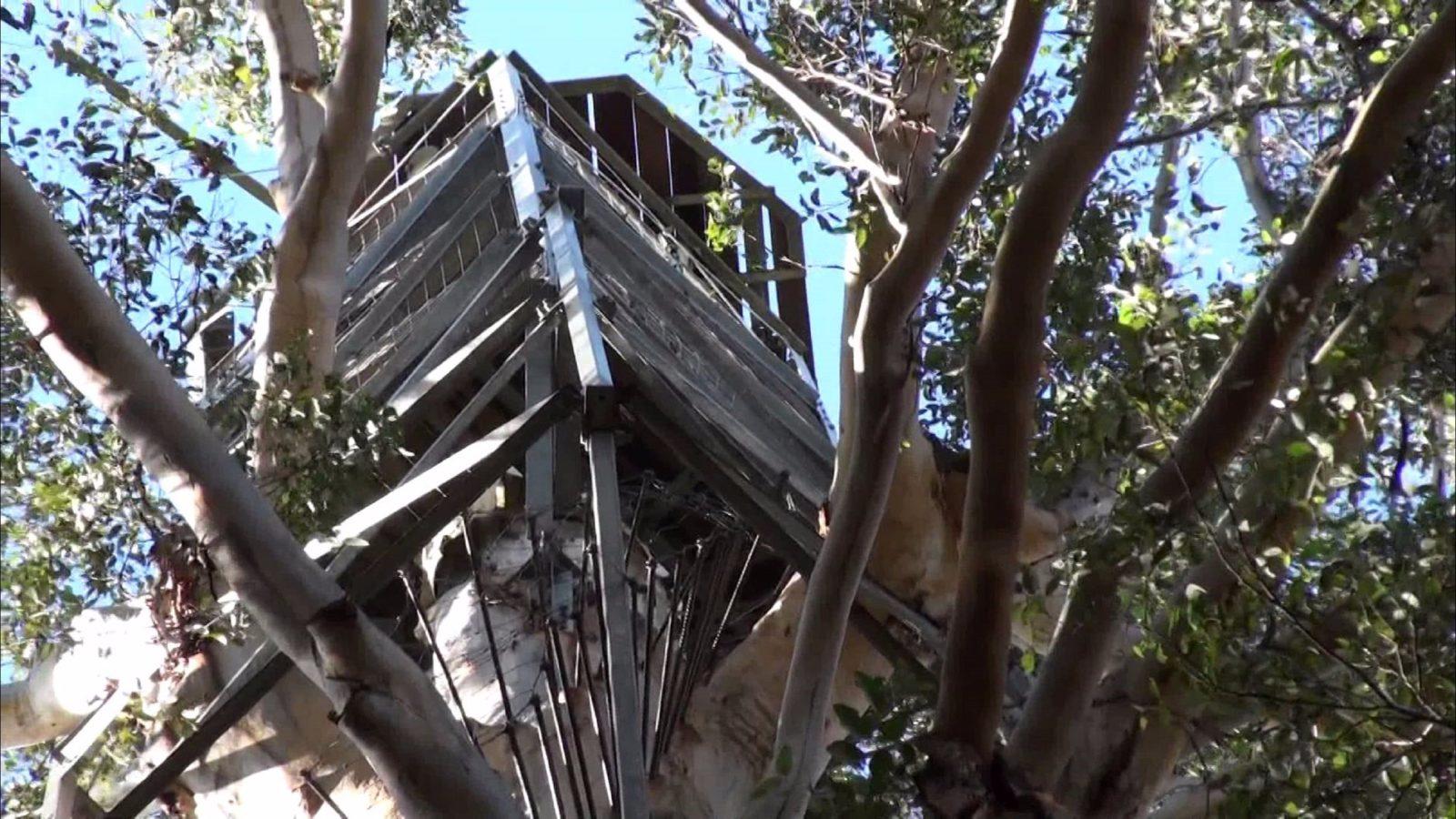 Gloucester Tree, Pemberton, Western Australia