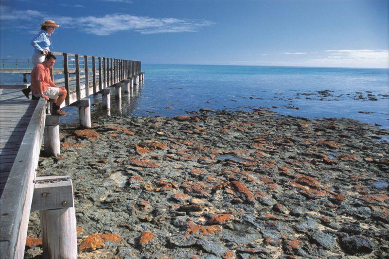 Hamelin Pool Stromatolites, Hamelin Pool, Western Australia