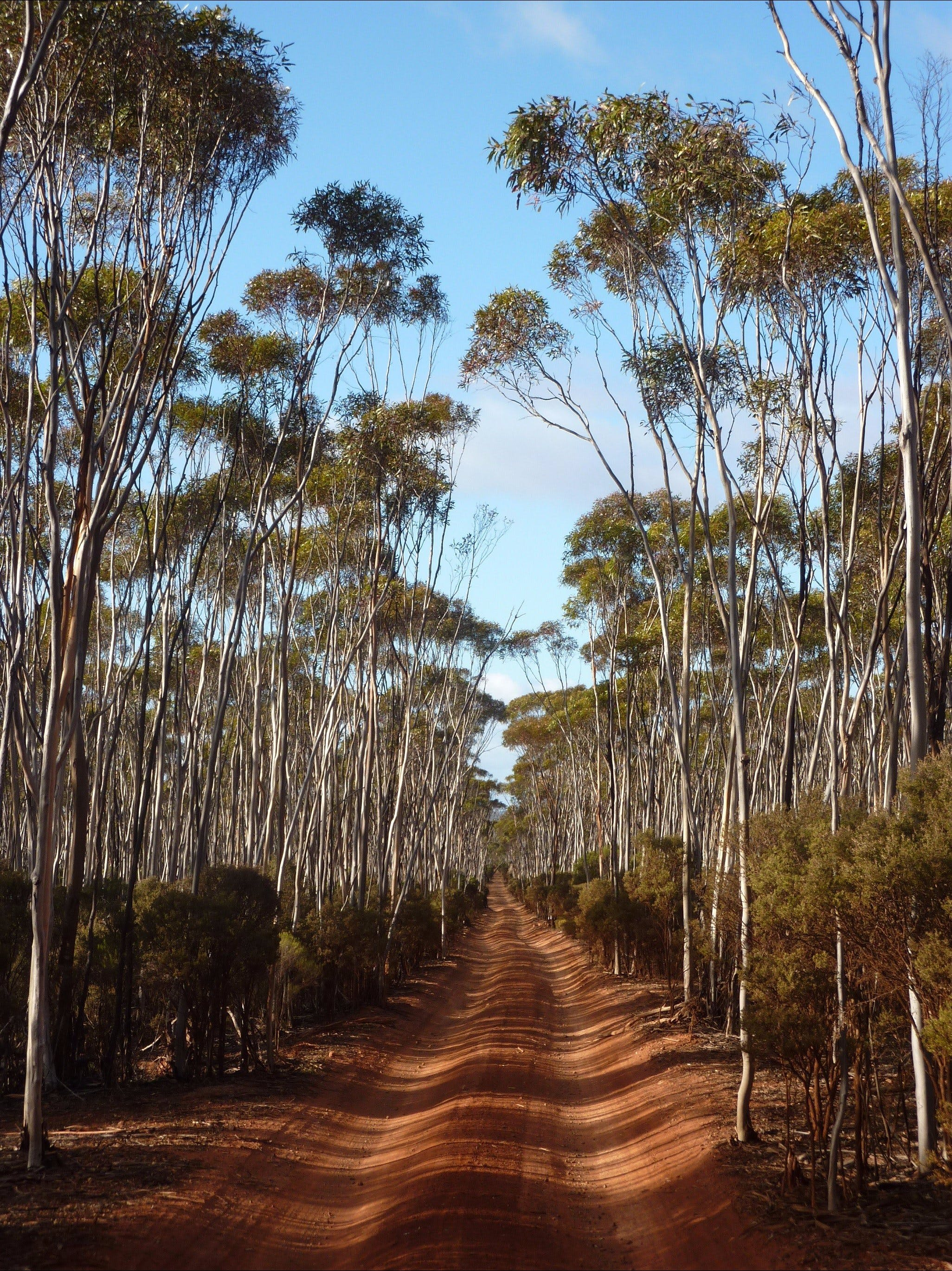 Holland Track, Western Australia