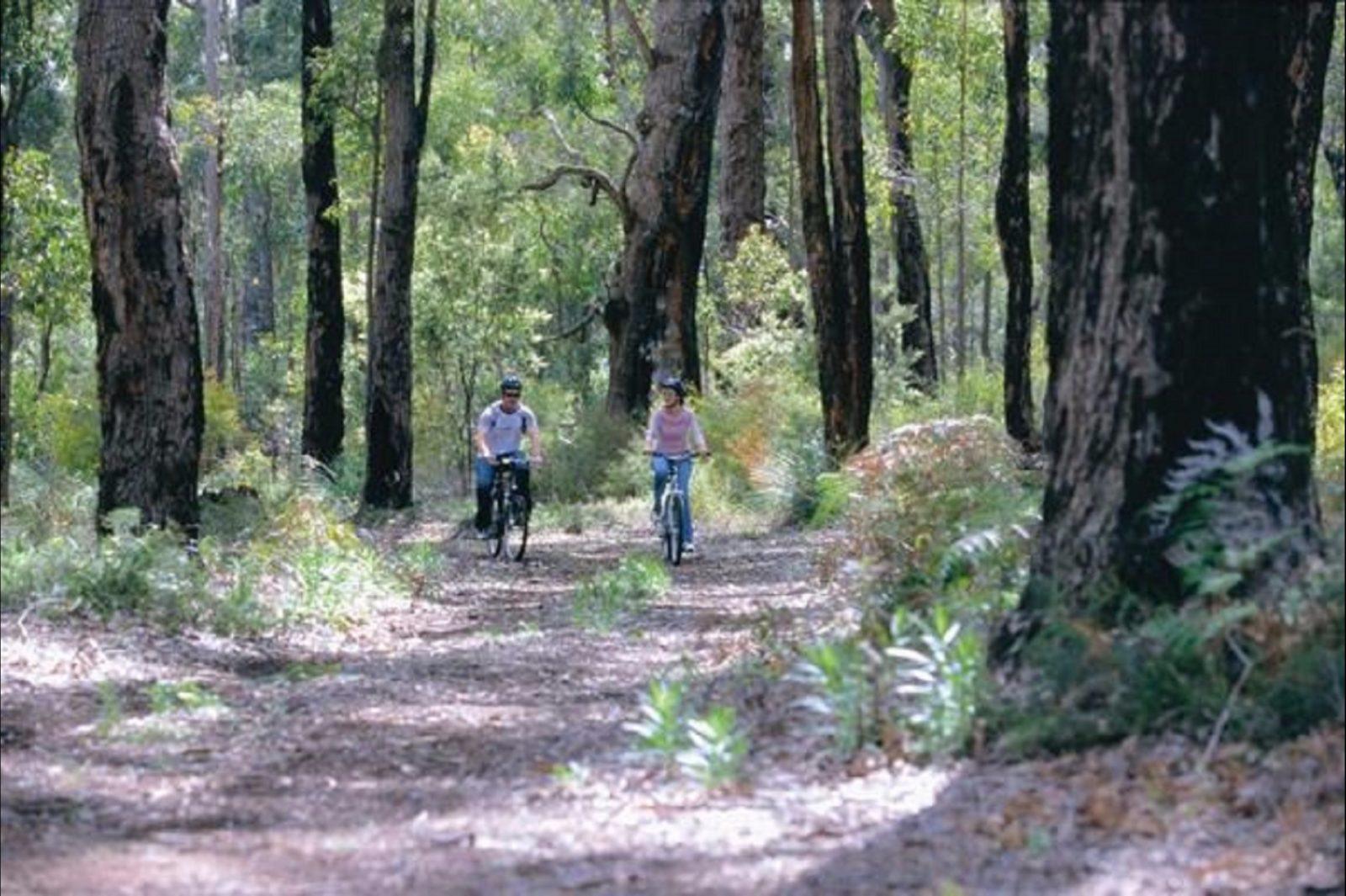 Jarrah Forest, Wellington National Park
