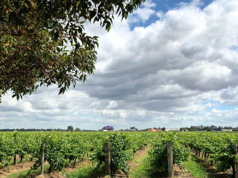 Jarrah Ridge Wines, Herne Hill, Western Australia