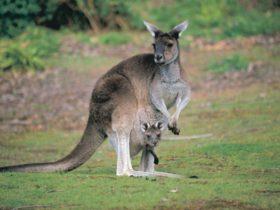 John Forrest National Park, Western Australia