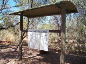 Joonjoo Botanical Trail, Derby, Western Australia