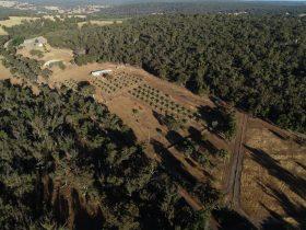 Julimar Date Garden, Julimar, Western Australia