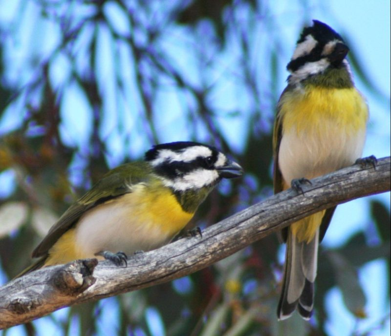 King River, Albany, Western Australia