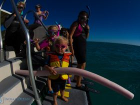 Kings Ningaloo Reef Tours, Exmouth, Western Australia