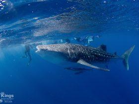 Kings Ningaloo Reef Tours, Exmouth, Western Australia