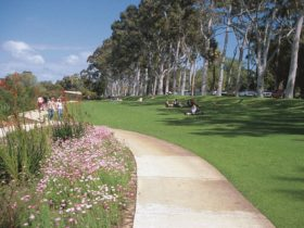 Kings Park Botanical Walks