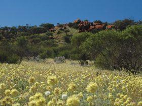 Koolanooka Springs, Morawa, Western Australia
