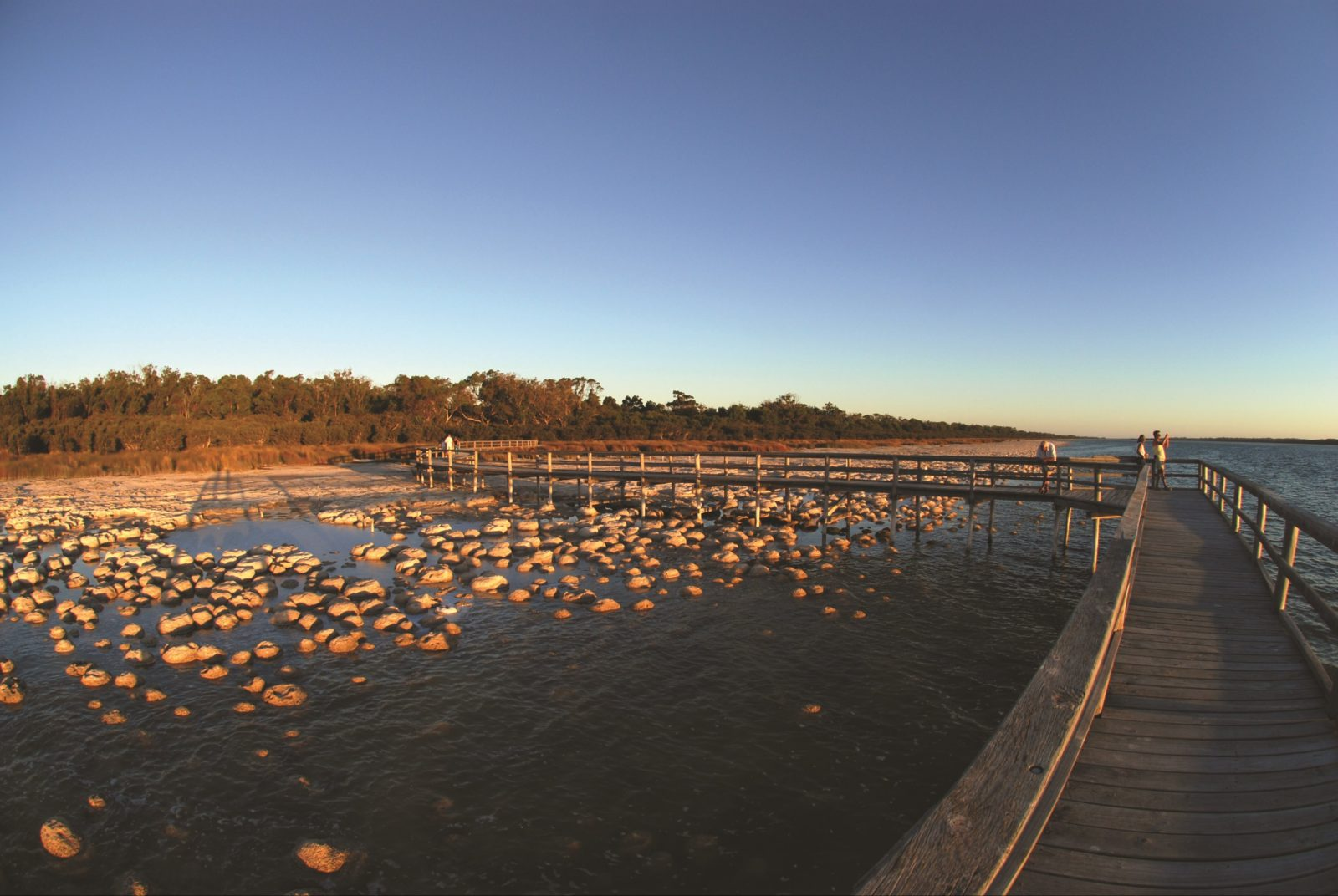Lake Clifton Thrombolites, Western Australia