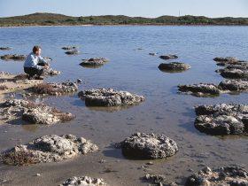 Lake Thetis Thrombolites, Cervantes, Western Australia