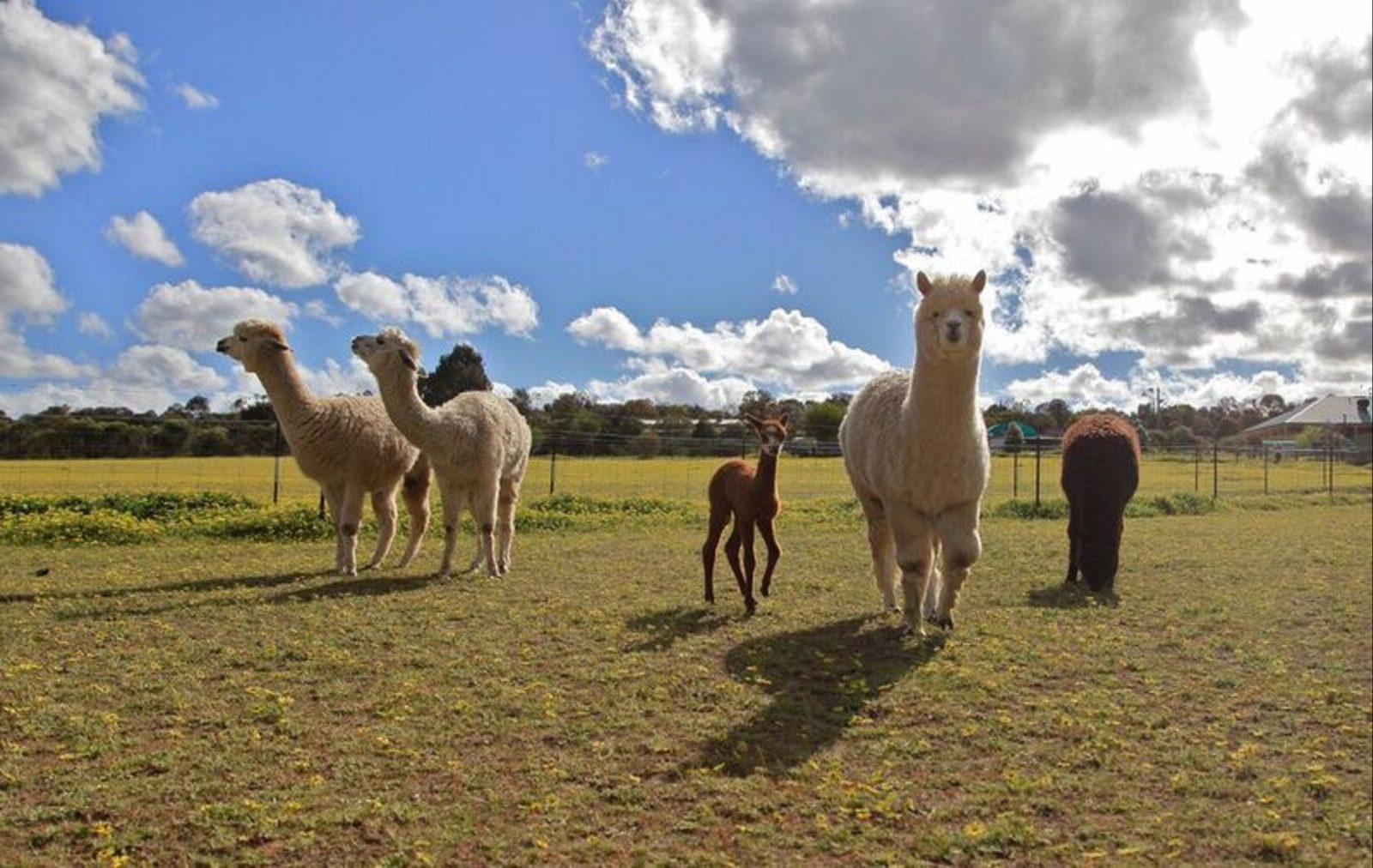 Lavendale Farm, York, Western Australia