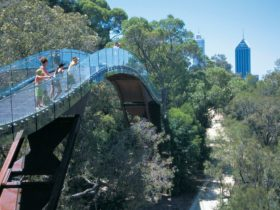 Law Trail and Lotterywest Federation Walkway, Kings Park, West Perth, Western Australia