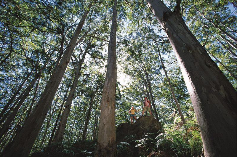 Leeuwin-Naturaliste National Park - Leeuwin