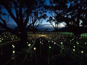 Light It Up Feast, Albany, Western Australia