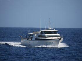 Mahi Mahi Fishing Charters, Coral Bay, Western Australia
