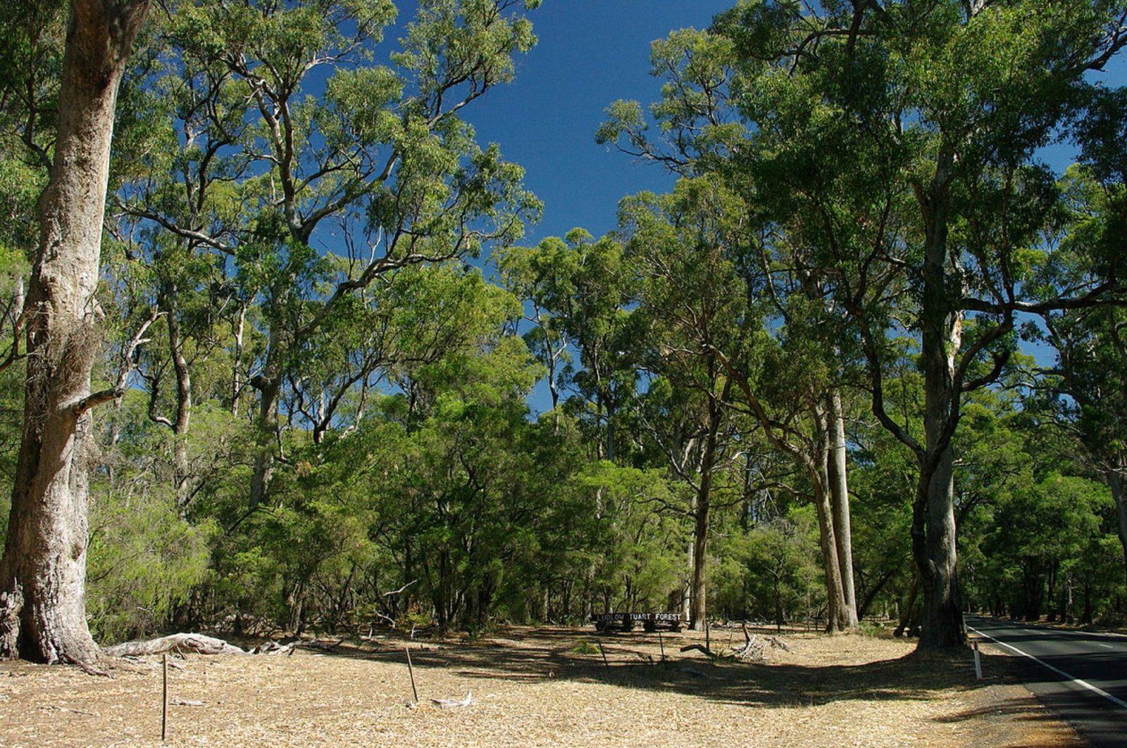 Maidens Tuart Forest, Bunbury, Western Australia