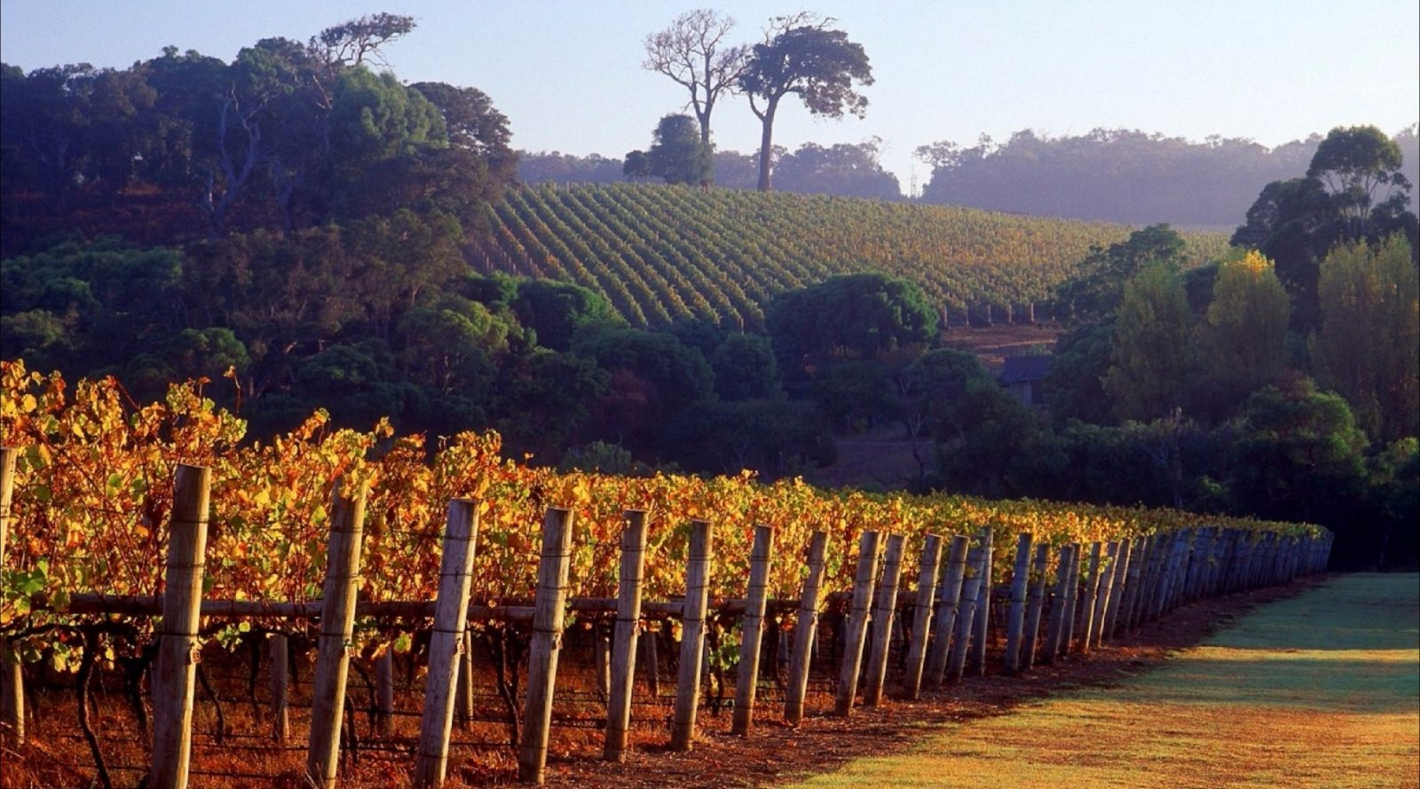 Maiolo Wines and Vineyard, Carbunup River, Western Australia