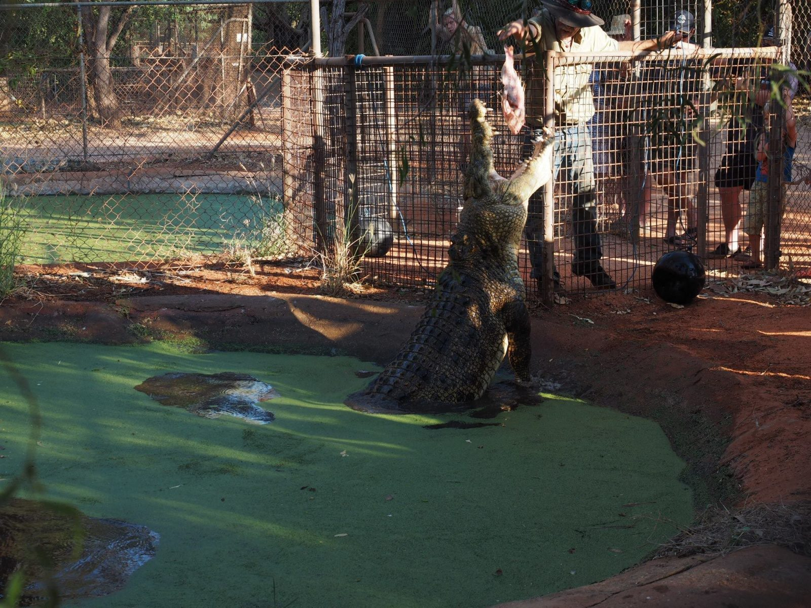 Malcolm Douglas Crocodile Park, Roebuck, Western Australia