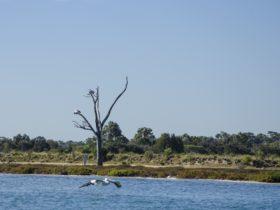 Mandurah Estuary and Peel Inlet, Western Australia