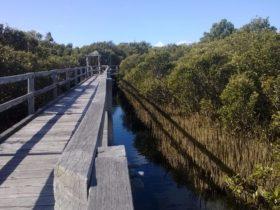 Mangrove Boardwalk, Bunbury, Western Australia