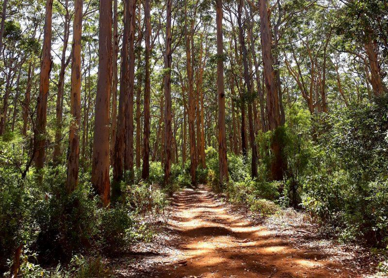 Margaret River Forest and Coast Walks, Margaret River, Western Australia