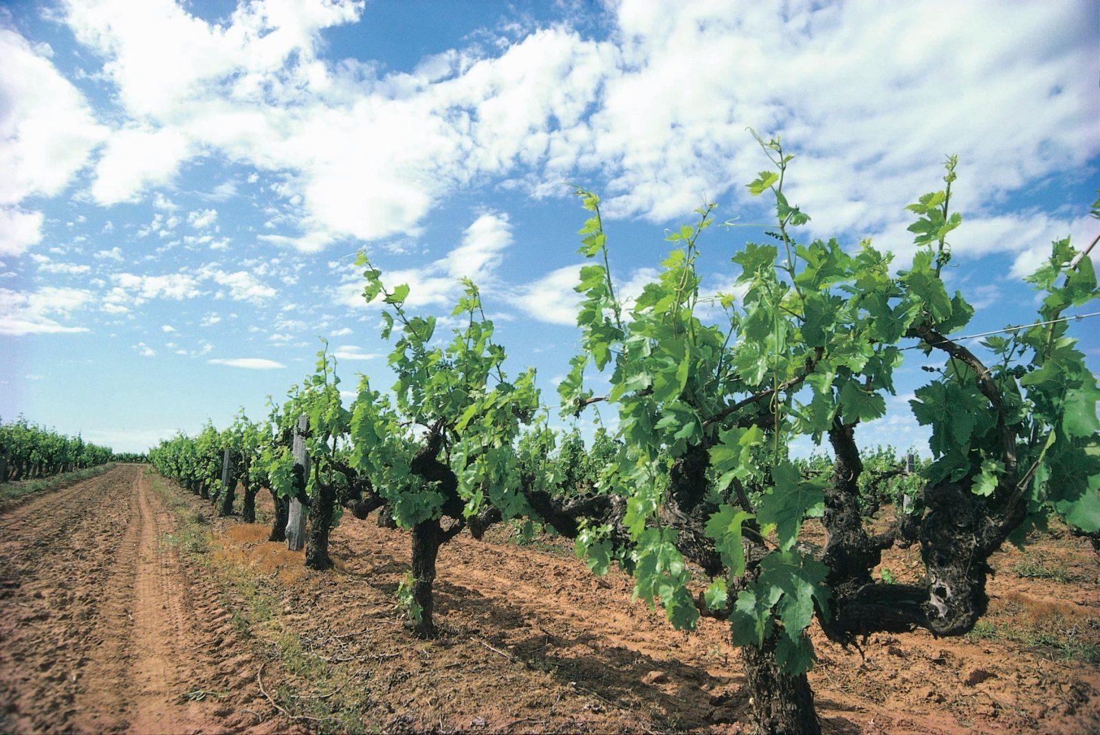Margaret River Small Family Winery Trail, Margaret River, Western Australia