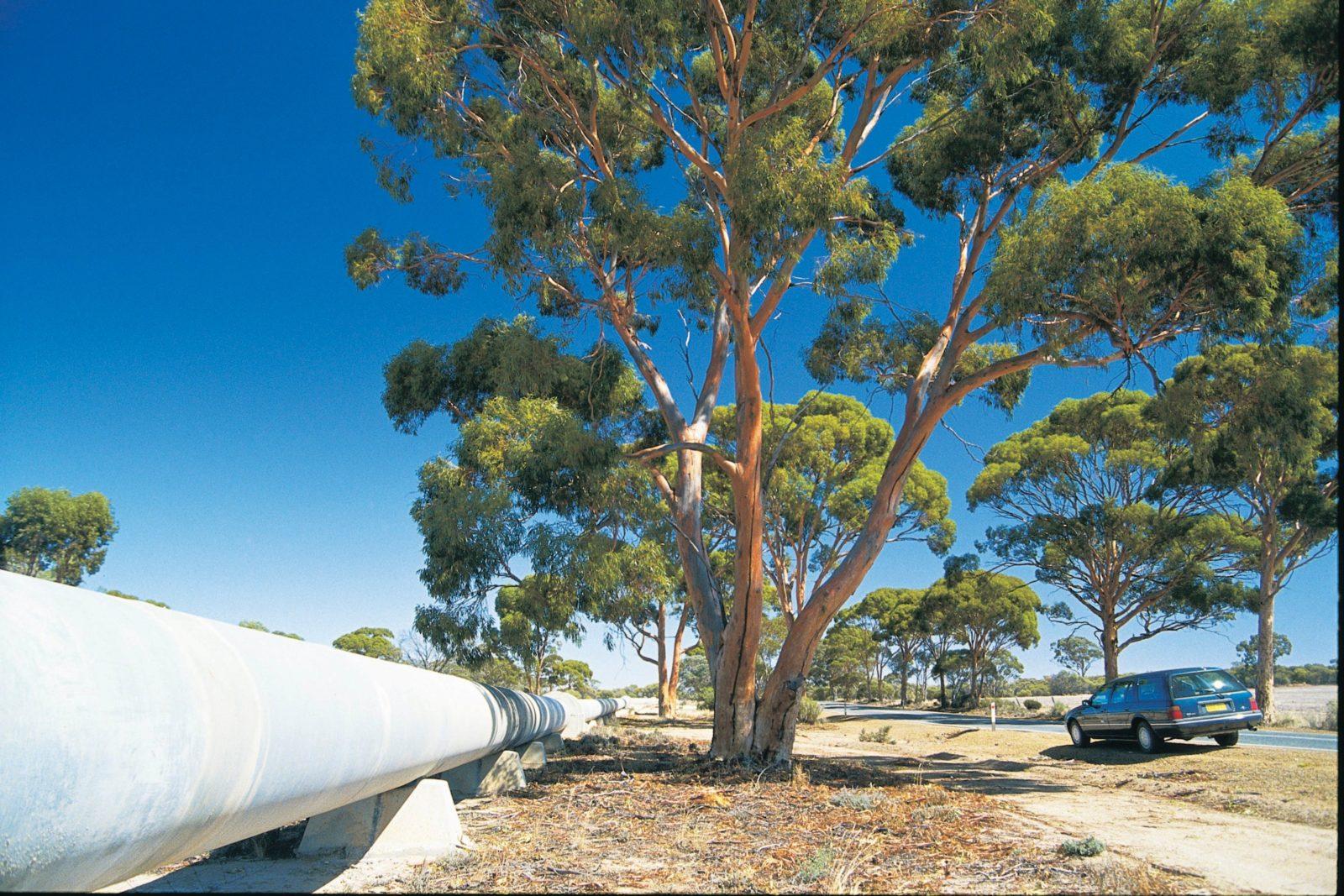 Meckering, Western Australia