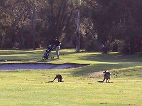 Melville Glades Golf Club, Leeming, Western Australia