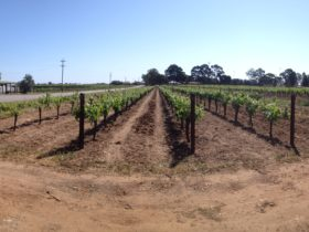 Morning Winery Tour & Tasting, Baskerville, Western Australia