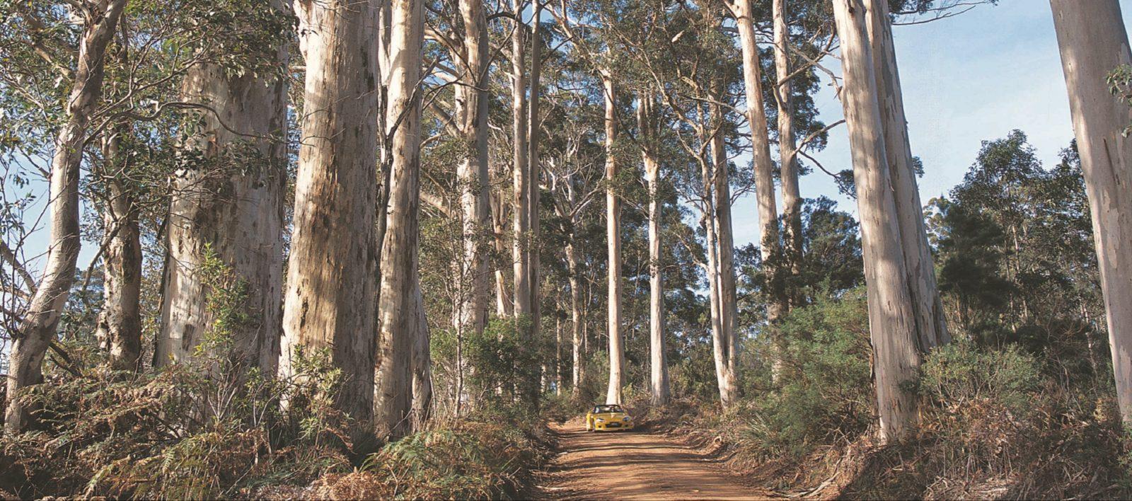 Mount Shadforth Scenic Drive, Denmark, Western Australia