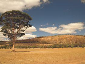 Mount Stirling, Quairading, Western Australia