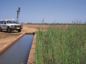 Myalls Bore, Western Australia