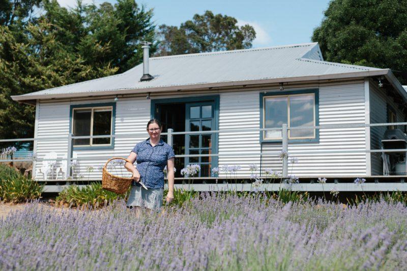 Nannup Lavender Farm, Carlotta, Western Australia