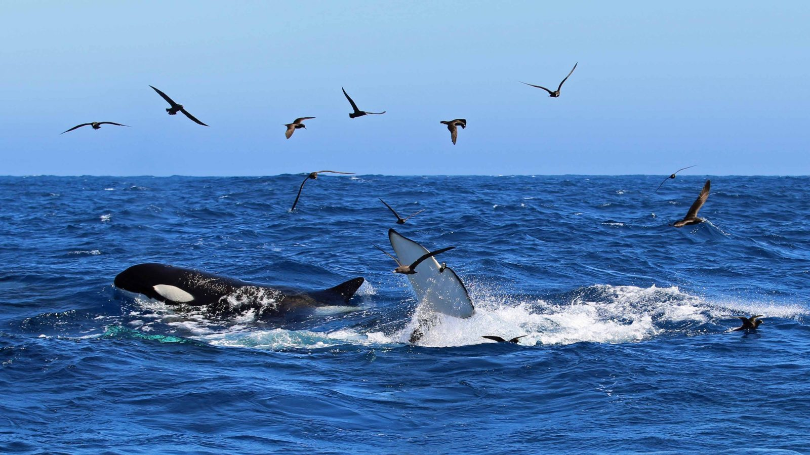 Naturaliste Charters Whale Watching, Dunsborough, Western Australia