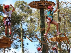 Next Level Monkey Business, Dunsborough, Western Australia