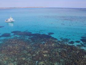 Ningaloo Marine Interactions, Coral Bay, Western Australia