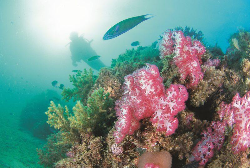 Ningaloo Marine Park, Exmouth, Western Australia