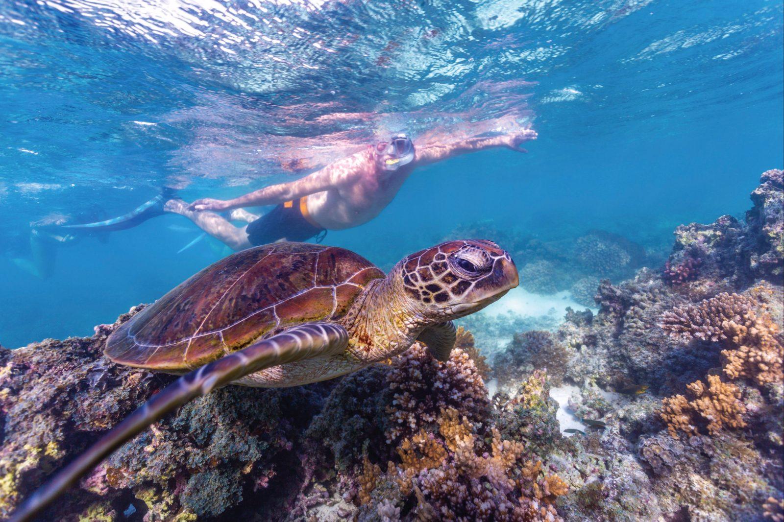 Snorkelling at Ningaloo Marine Park