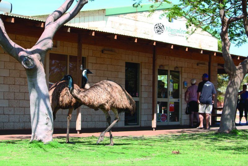 Ningaloo Visitor Centre, Exmouth, Western Australia