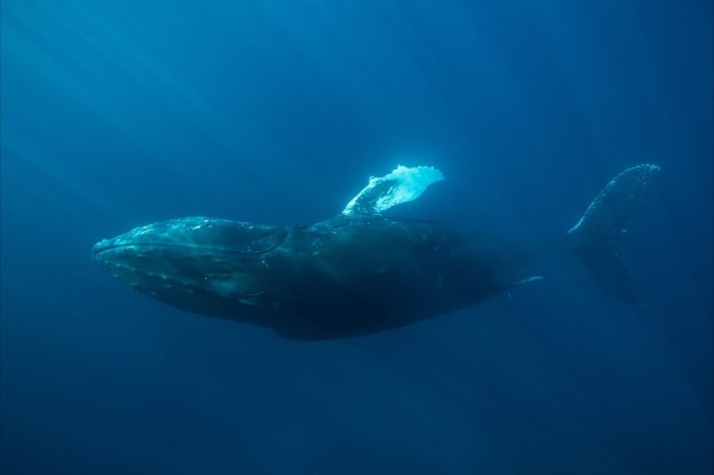 Ocean Eco Adventures, Exmouth, Western Australia