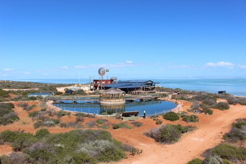 Ocean Park Aquarium, Shark Bay, Western Australia