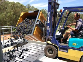 Olive Farm Wines, Millendon, Western Australia