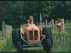 Oranje Tractor Wine, Marbelup, Western Australia