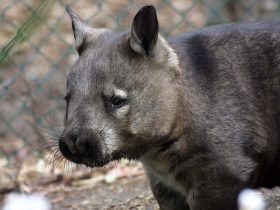 Peel Zoo, Pinjarra, Western Australia