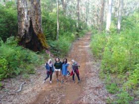 Pemberton Discovery Tours, Western Australia